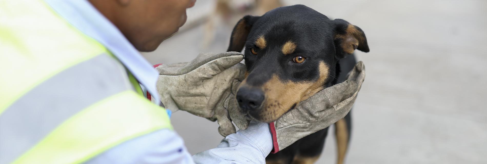 Héroes al rescate animal en la Panamericana Norte